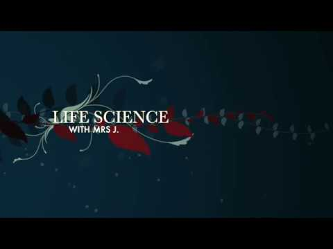 Life Science Lesson 4