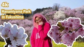 Sakura at Hanamiyama Park in Fukushima Prefecture