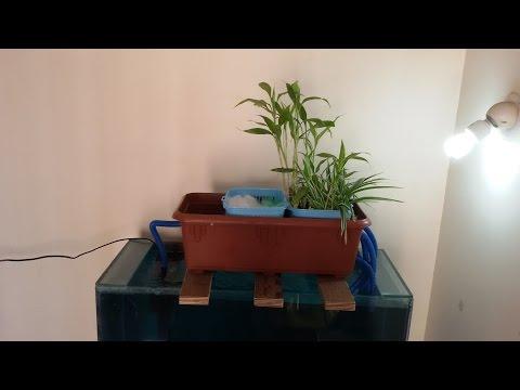 DIY AQUAPONICS OVERHEAD SUMP FILTER