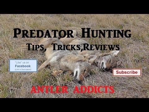 Predator Hunting Tips. Tricks. Reviews (Primos