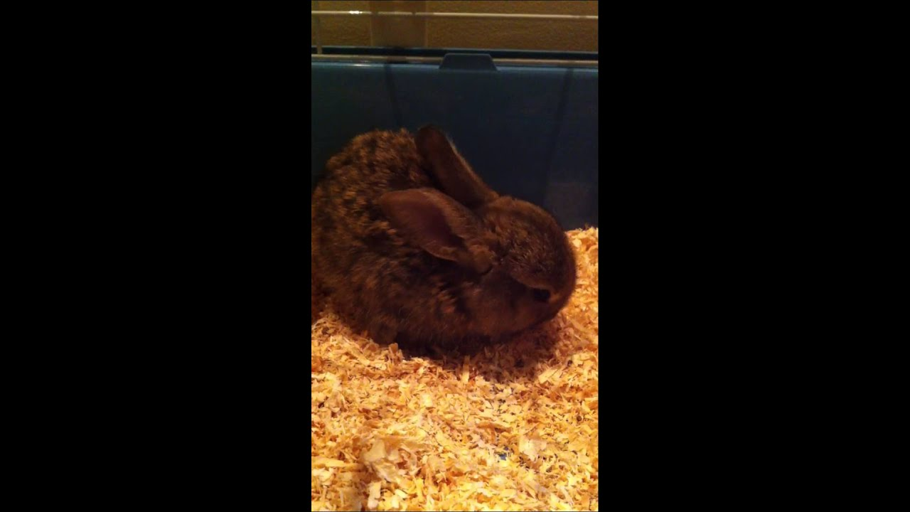 Cute Rabbit - YouTube