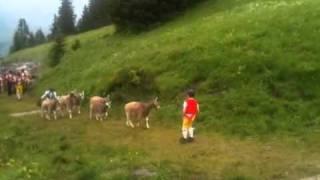 Selun Alpfahrt 2011 Schweiz