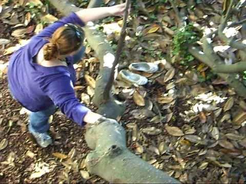 Climbing the Petty Tree