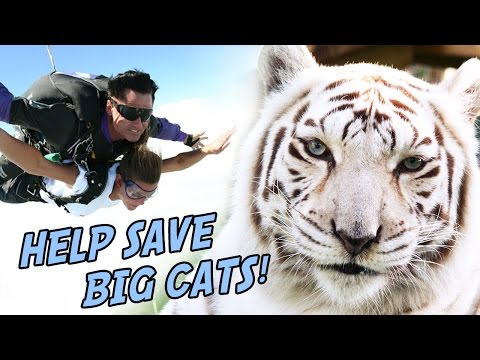 Skydive to SAVE BIG CATS!