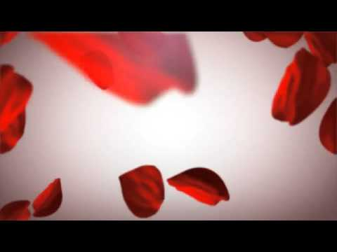 Valentine Day With Rose Petals video