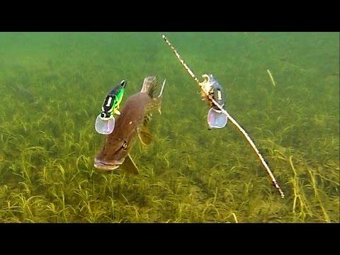 как берет щука под водой видео
