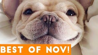 Funniest Pet Reactions \u0026 Bloopers of November 2017 | Funny Pet Videos