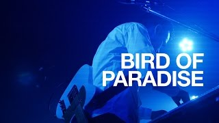 Bird Of Paradise (Live at Fever, Tokyo, 11092016)