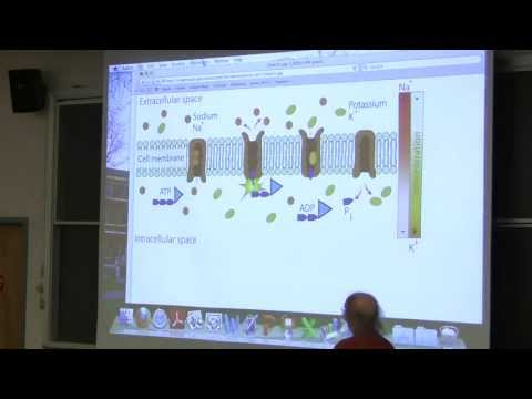 #11 Biochemistry Lecture (Enzyme Regulation II) from Kevin Ahern's BB 350