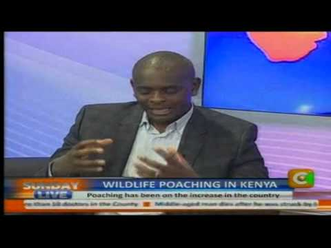 Sunday Live Interview: Wildlife Poaching in Kenya