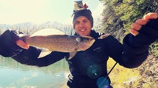 Catch n' Cook New Fish Deep in the Snowy Mountains!