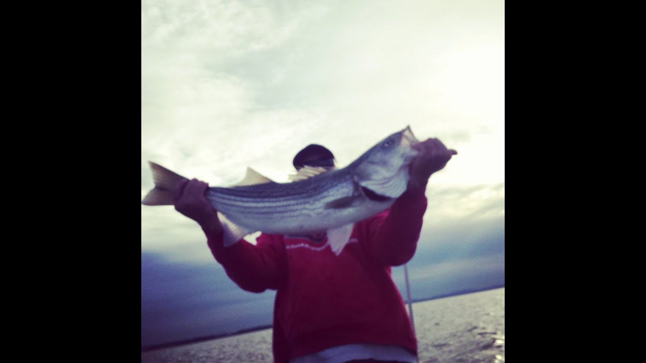 Big San Francisco Bay Striped Bass Guided Fishing Charter