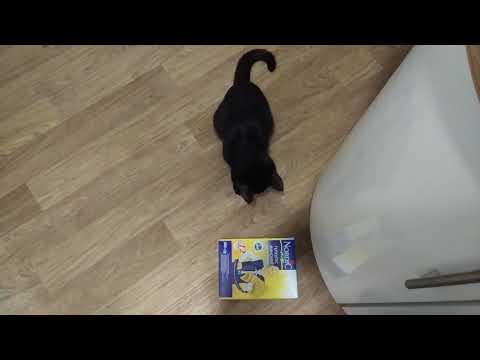 Кот застрял в коробке (9 месяцев)