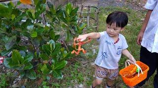 Johnny Johnny Vaikai Vaikams 学习颜色与婴儿Gombal糖果孩子手指家庭的话 学习颜