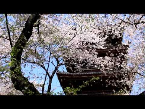 ソプラノサックスで『 花は咲く 』〈 Flowers Will Bloom 〉charity Song For Japan Earthquake 2011 video
