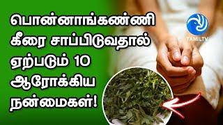பொன்னாங்கண்ணி கீரை சாப்பிடுவதால் ஏற்படும் 10 ஆரோக்கிய நன்மைகள்! – Tamil TV