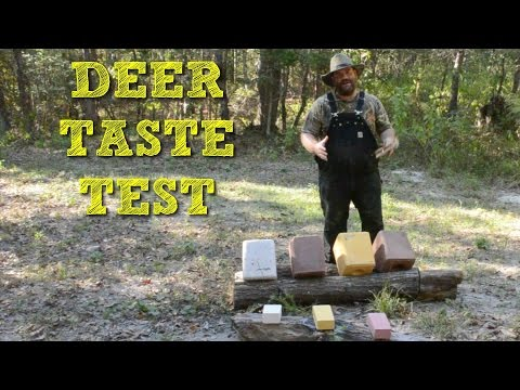 What do Deer Eat? Deer Salt Block Taste Test!