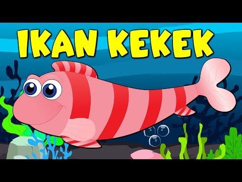 Lagu Kanak Kanak Melayu Malaysia - IKAN KEKEK