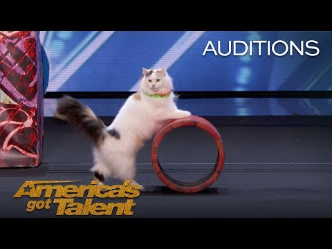 The Savitsky Cats: Super Trained Cats Perform Exciting Routine - America's Got Talent 2018