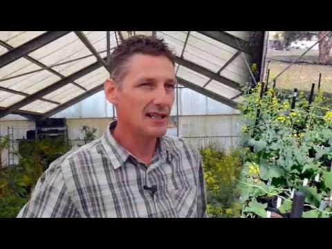 Pioneer® brand canola breeding process