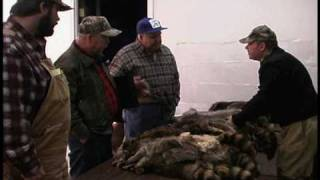Fur Auction in Southern Indiana
