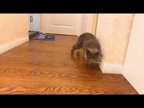 funny cats and dogs with tape