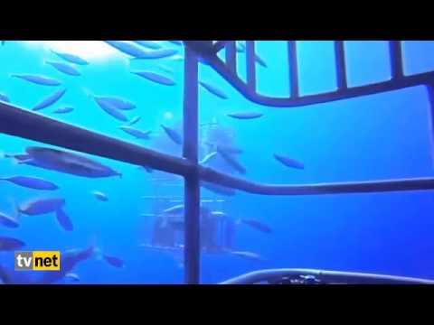 Dalgıçların köpekbalığı saldırısına uğradığı an