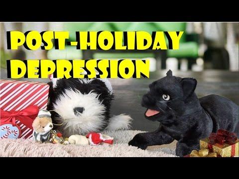George the Self Esteem Cat: Post-Holiday Depression