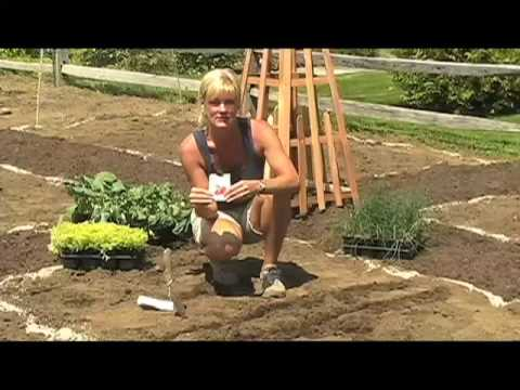 Vegetable Gardening from White Flower Farm, Part 1