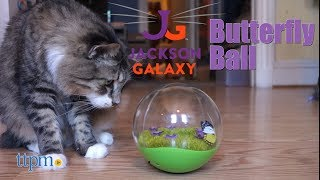 Jackson Galaxy Butterfly Ball from Petmate