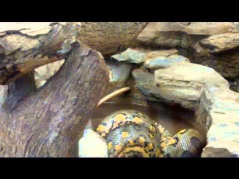 Pictures of Valleys in Trinidad Valley Zoo Trinidad