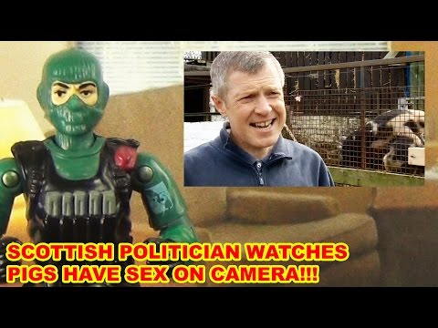 Scottish Politician's TV interview Videobombed By Horny Pigs - AFT News