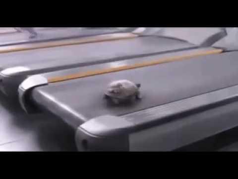 Всю жизнь нас обманывали про медлительность черепах... ))