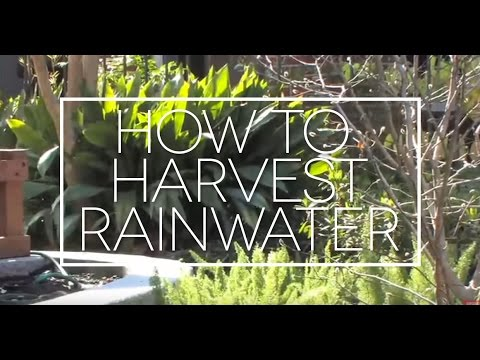 How to Use Rainwater for Drip Irrigation, a Step-by-Step Demonstration