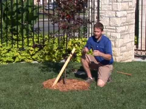 How To Stake A Tree Youtube