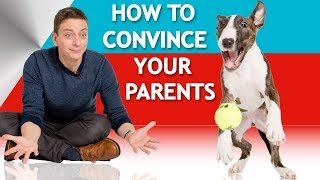 How to Convince Your Parents to Let You Have a Dog!