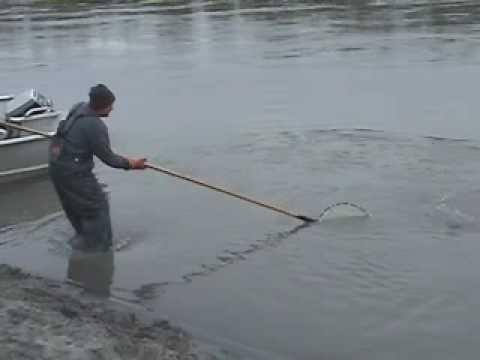 Hooligan Fishing in Alaska