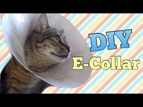 Make A Cat Neck Cone