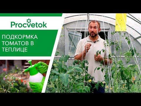 Элементы для СЛАДОСТИ помидоров. Подкормка томатов во второй половине вегетации.