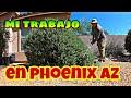 limpiando yardas en phoenix az