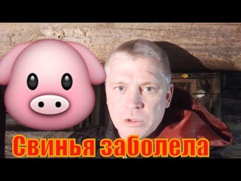 Чем лечить свиНью? Болезни свиНей// Зауральское подворье
