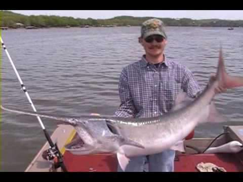 Snagging spoonbill paddlefish lake ozarks youtube for Missouri out of state fishing license