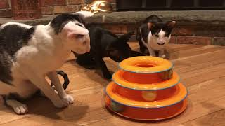 Cat toy that really works