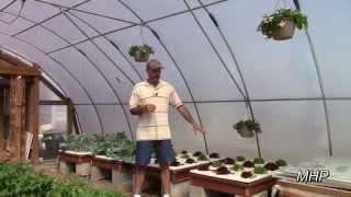 Failed Again - Organic Hydroponic Fertilizer Experiment