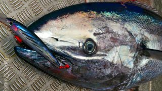 BUTTERFLY TUNA HIGHLY UNUSUAL - YouFishTV
