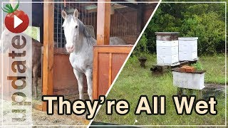 Checking On Animals In The Rain - Walk With Me