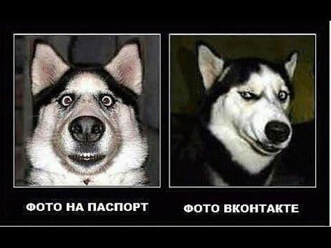 Самые смешные приколы с животными октябрь 2016 (2)The most funny jokes with animals October 2016 (2)