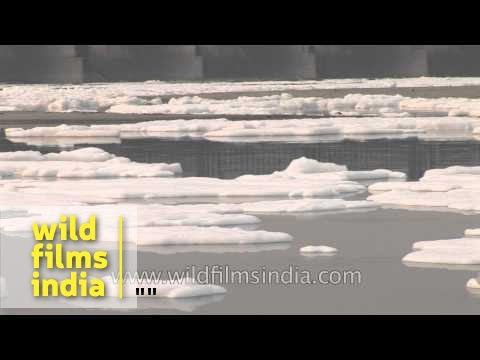 Chemicals and industrial effluents in Yamuna river