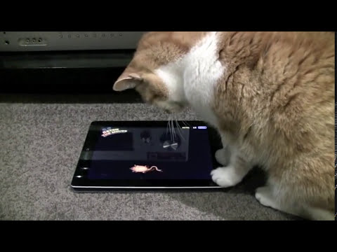 17yo Oscar playing with iPad2 Application specifically for cats