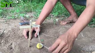 Amazing Quick Wild Trap Using Bamboo Branch - How To Make Best Squirrel Trap Working 100%